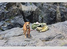 Complete Guide to Taking Your Dog Camping   DogVills