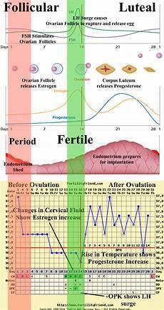 The Bump Ovulation Chart Hormones Chart Fertility Awareness Method Fertility