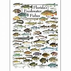 Florida Fish Id Chart Amazon Com Poster Florida S Freshwater Fishes Posters
