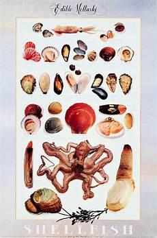 Shellfish Chart Understanding Food Classification Of Fish And Shellfish