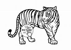 tiger animals coloring pages for printable