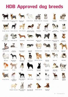 Dog Name Chart Types Of Pets Allowed In Hdb Paulng Property