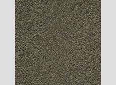 Home Decorators Collection Carpet Sample   Slingshot II   In Color Oxford 8 in. x 8 in. SH