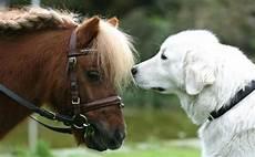 hund pferd lockt tierliebhaber nach dortmund welt