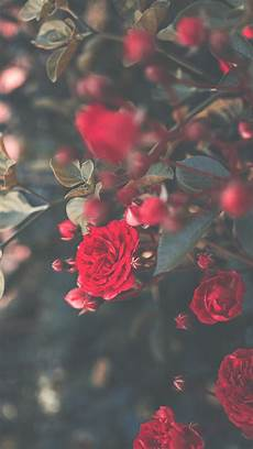 x flower wallpaper 29 roses iphone x wallpapers preppy wallpapers