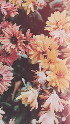 flower lockscreen wallpaper resultado de imagem para lock screen wallpaper
