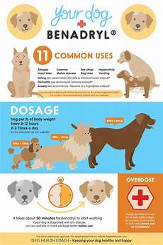 Benadryl For Dogs Dosage Chart Ml How To Handle Dog Anxiety For New Year S And Beyond
