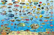 Reef Fish Identification Chart Why You Should Avoid Eating Reef Fish Vanuatu