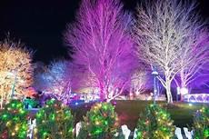 Winter Lights Arboretum Nc Winter Lights The North Carolina Arboretum