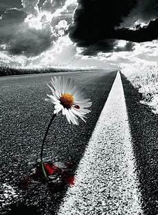 fiori tra l asfalto the on mind fiori d asfalto e cemento