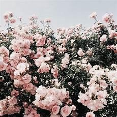 aesthetic flower desktop wallpaper freetoedit background backgrounds pink aesthetic flower