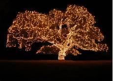 Tree Lights Annual Piedmont Avenue Tree Lighting Ceremony Philippa