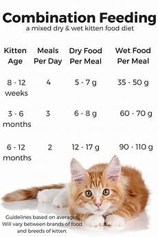 How Much To Feed A Cat Chart Combi Kitten Food Chart Kitten Food Feeding Kittens