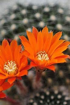 orange flower phone wallpaper 167 best images about iphone wallpapers on