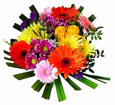 flower images hd png colourful flowers hd shan studio