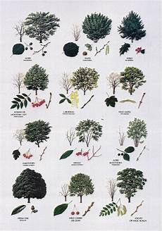Tree Leaves Chart Tree Identification By Leaf Chart Photo Gallery