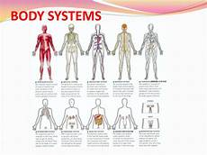 11 Body Systems Ppt Body Systems Powerpoint Presentation Id 1984174