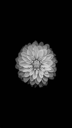 Iphone Wallpaper Original Flower by Amoled Wallpapers Flower Wallpaper Glowing Flowers