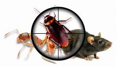 home pest innopest