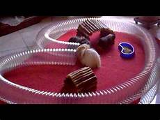 gabbie per cavie peruviane porcellini d india impazziti tra tubi e casette