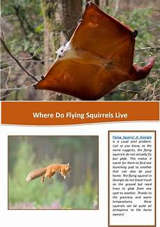 Where Do Squirrels Live Where Do Flying Squirrels Live