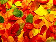 Autumn Powerpoint Background Autumn Leaves Powerpoint Background 1001 Christian Clipart