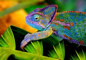 The Chameleon Approach to Business Growth, Disruptive Marketing