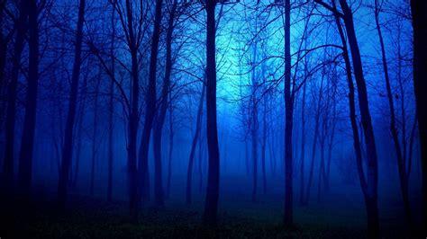 wallpaper blue forest blue forest high definition wallpaper 25603 baltana