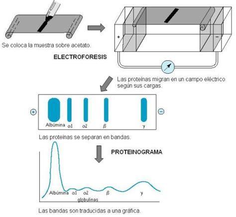 proteinograma o que genomasur