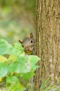 3d Walk Through squirrel hiding behind a tree during my walk through