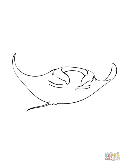 manta ray coloring page free printable coloring pages