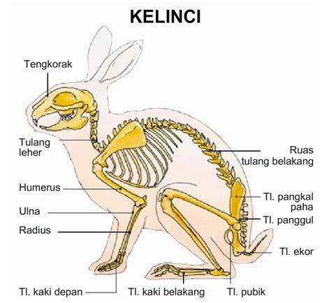 Kelinci Kaki S bagian bagian tubuh hewan dangstars
