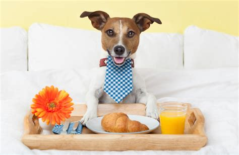 pet friendly bed and breakfast the pet friendly trend welcome your guests furry friends