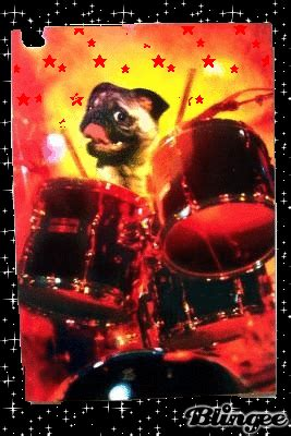 pugs and drummers pug drummer picture 2888344 blingee