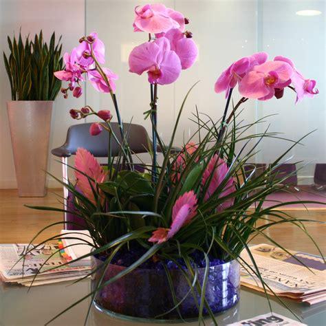 indoor flowering plants  easiest flowers  grow