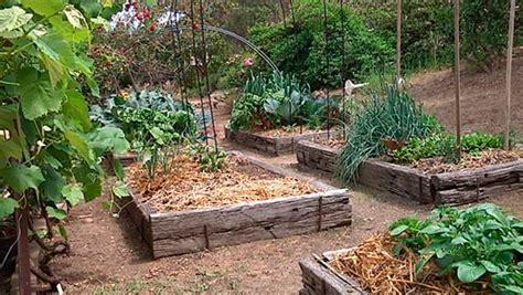 Spring Vegetable Garden Part 3 Beans Lettuce Organic Vegetable Garden Australia
