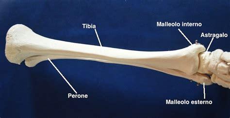 dolore al gomito sinistro interno caviglia fisioterapia rubiera