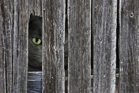 how to keep cats out of your backyard how to keep neighborhood cats out of your yard pet care