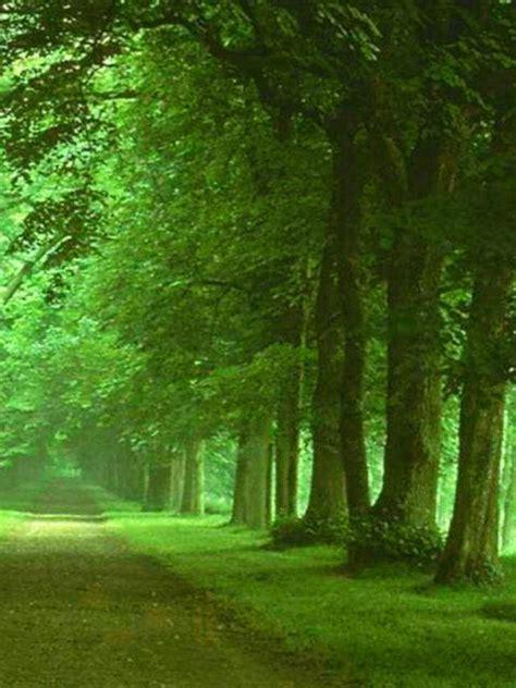 camino verde fondo escritorio paisaje camino verde