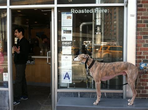 puppy cafe nyc friendly cafe in nyc the roasting plant nyc resources