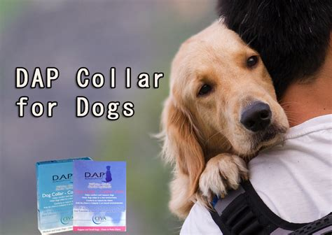 dap for dogs dap collars the best way to pacify anxiety disorders in