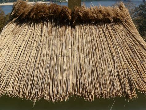 straw thatched roof straw roofing stock photo thatch roof background