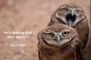 Owl Memes - 16 funny owl memes for fum and interesting articles feafum