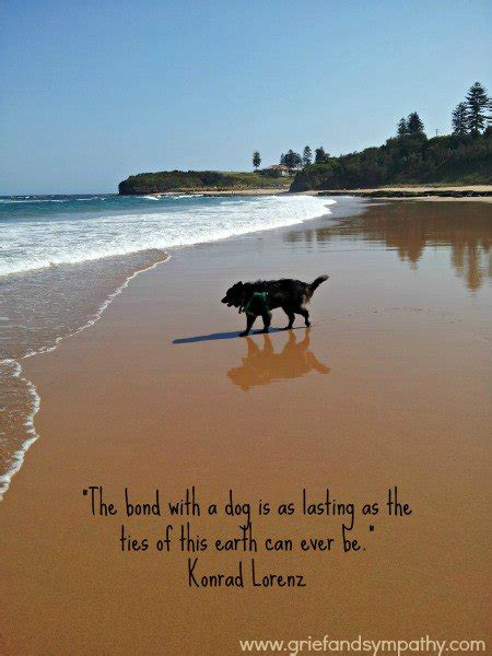 comforting quotes about death of a dog dog quotes loss of pet www pixshark com images