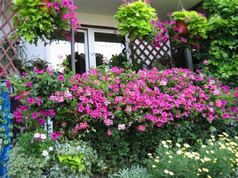 Best Garden Flowers Best Plants For Balcony Garden