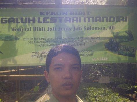 Bibit Jamur Tiram Tegal pembibitan jati solomon home