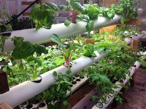 hydroponics speed fresh vegetables to the table by