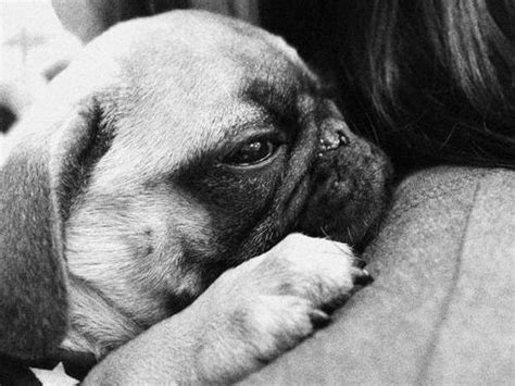 hug a pug day these photos of dogs hugging their owners will make you go quot aww quot