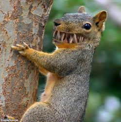 squirrel shark pictures freaking news