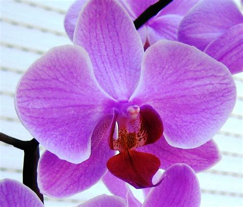 orchids facts facts about orchids orchid flowers